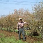 龍ケ崎市ブルーベリーつみとり園の直植大苗おゆずりします