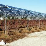 太陽光発電とブルーベリー園